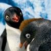 踢躂小企鵝2 (Happy Feet 2)