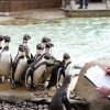 倫敦動物園