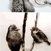 用羽毛畫出來的小鳥,超讚